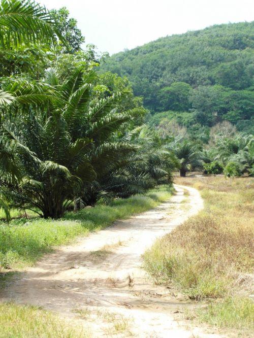 Tropical Dirt Road