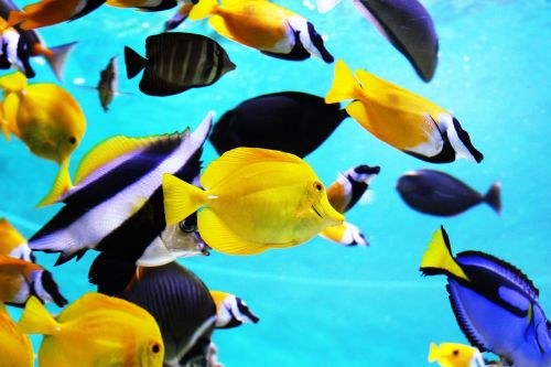 tropical fish aquarium fish