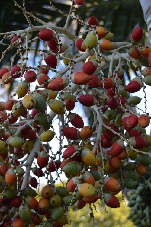 tropical fruit berries exotic