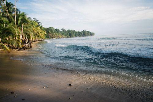 atogrąžų sala,bangos,vandenynas,smėlis,Smėlėtas paplūdimys,kriauklės,palmės,delnus,palmės,atogrąžų,atogrąžų paplūdimys,melynas vandenynas,juros,rojus,kelionė,paplūdimiai,dangus,vanduo,kranto,pakrantė,Krantas,įlanka,medžiai,turizmas,Ramiojo vandenyno regionas,Kelionės tikslas,idiliškas,diena,akmenukai,atostogos