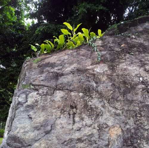 Tropical Plants On The Rock