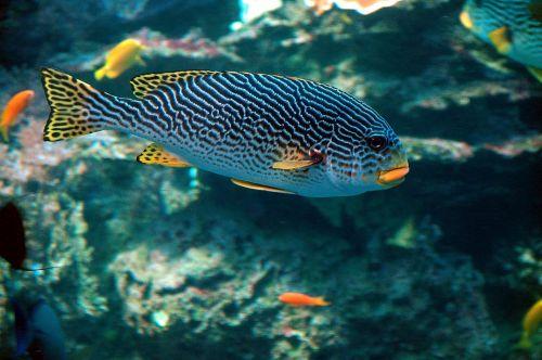 Tropical Salt Water Fish