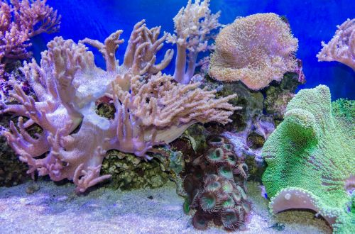 Tropical Sea Underwater With Corals