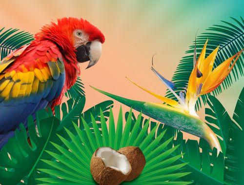tropics summer summer holiday