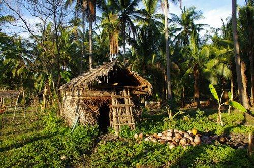 tropics  hut  coconuts