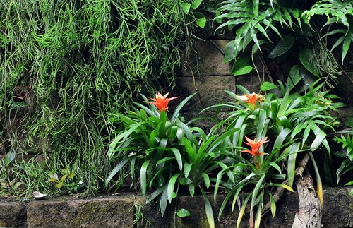 tropics  rainforest  exotic