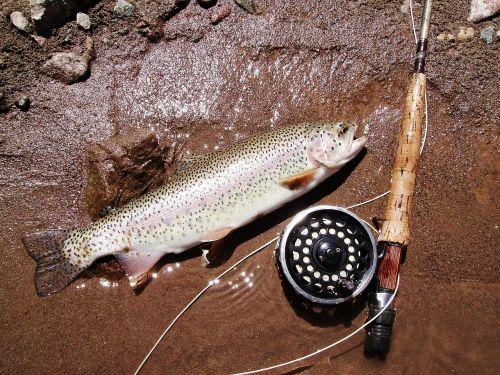 trout fishing return