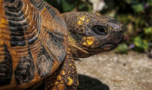 trtoise turtle macro