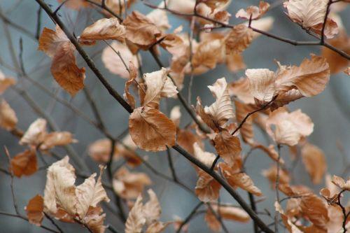 true leaves leaves autumn