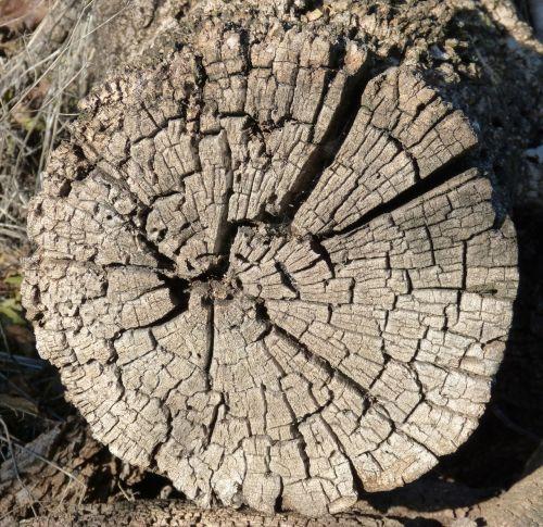 trunk worn old