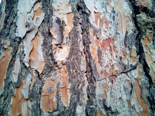trunk bark texture