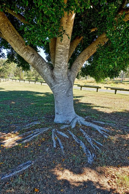 trunk tree roots