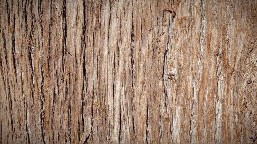 trunk bark tree bark