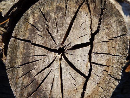 trunk wood cracks