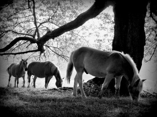 trunk horse equine