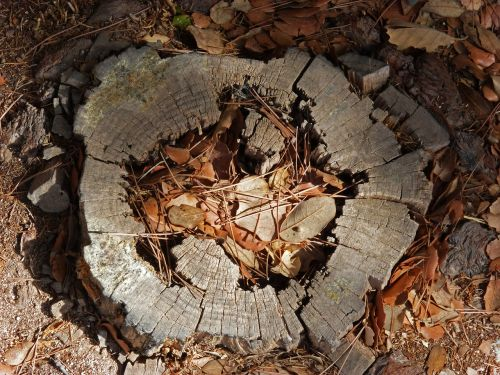 trunk tree felling talar