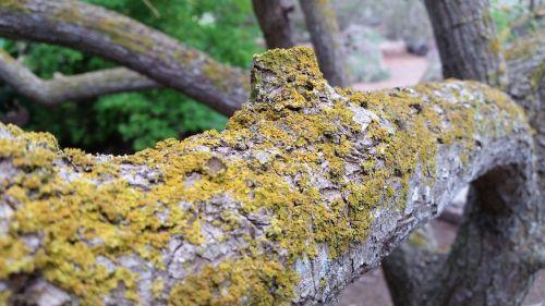 trunk fungus moss