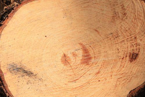 trunk dry tree