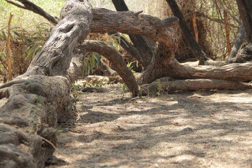 bagažinė,gamta,medis,mediena