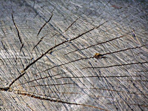 trunk tree jar