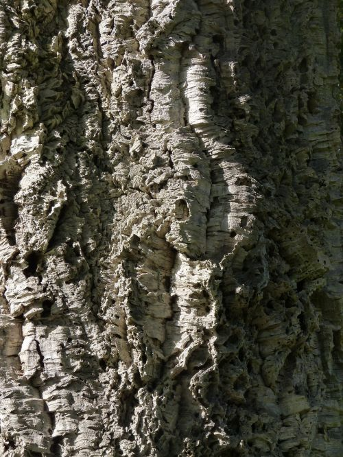 trunk wood texture