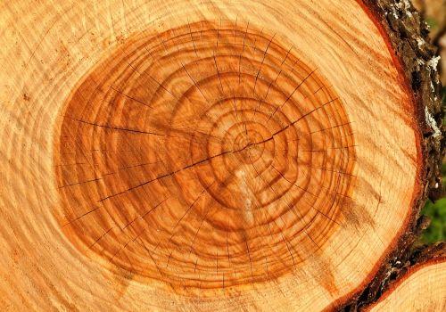 bagažinė, medis, mediena