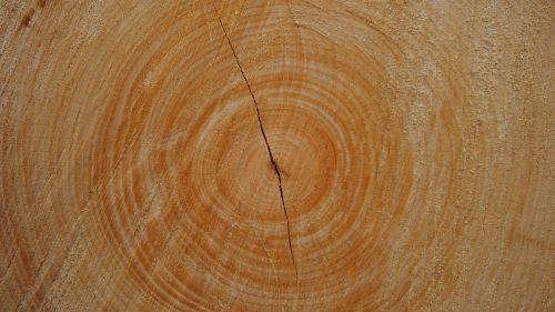 trunk wood tree