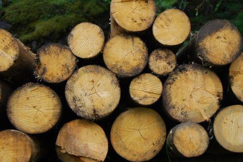 trunks,wood,brown,tree trunk,plant,mountain,biomass,tree,woods,woodcutter,lumber