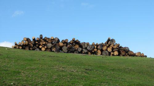 trunks wood trunks of trees