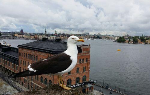 trut stockholm bird's eye view