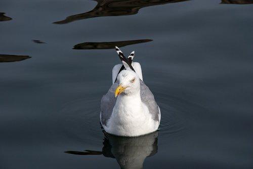 trut  seabird  coast