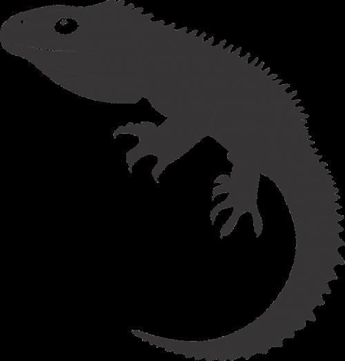 tuatara reptile ancient reptile