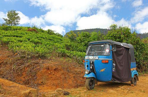 tuk-tuk tricycle plantation