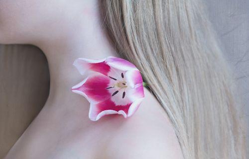 tulip flower pink white