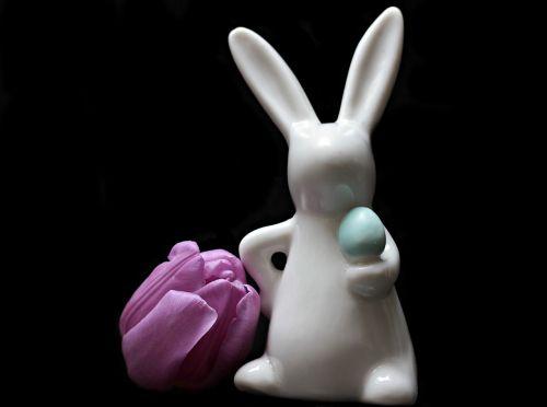 tulip flower hare