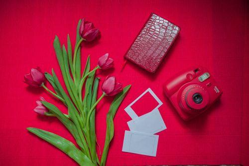 tulip polaroid card