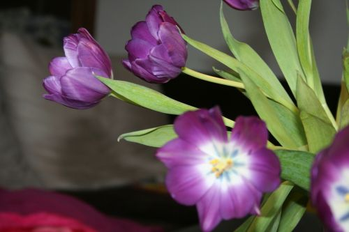tulip purple stamp