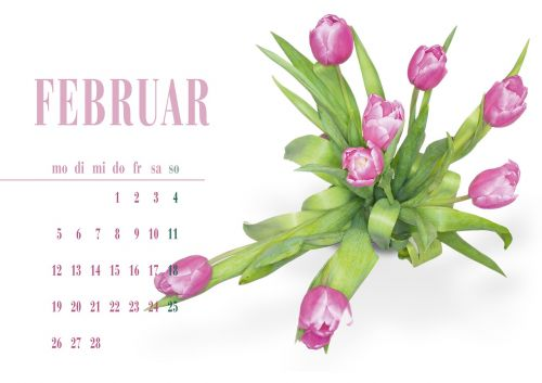 tulip pink spring