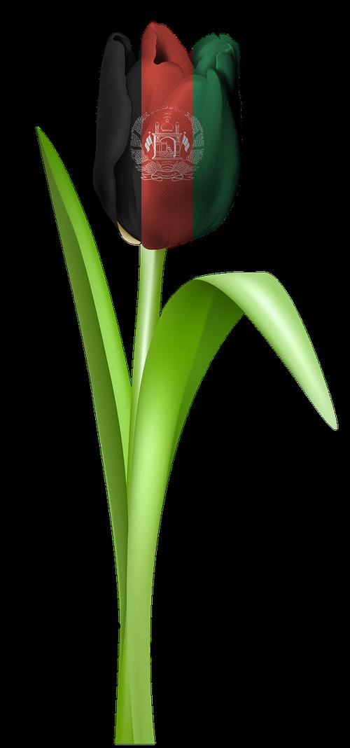 tulip  iran  tajikistan