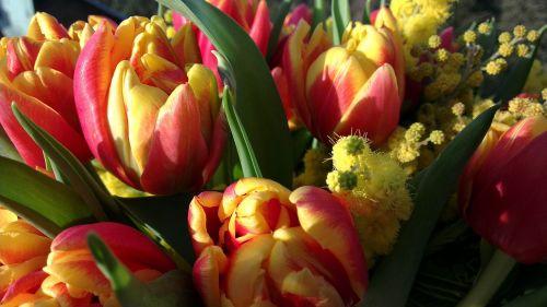 tulip mimosa flower bouquet