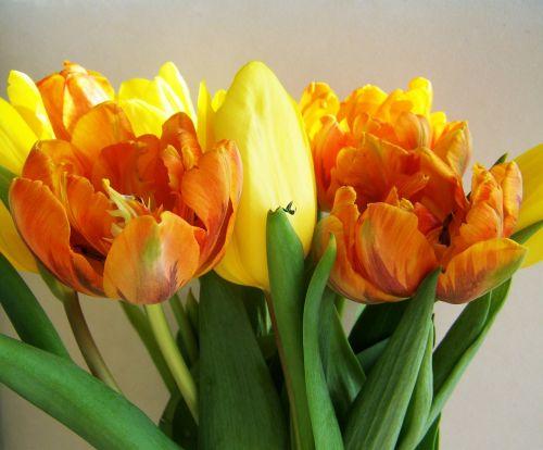 tulpių puokštė,geltona-oranžinė,supjaustytos gėlės