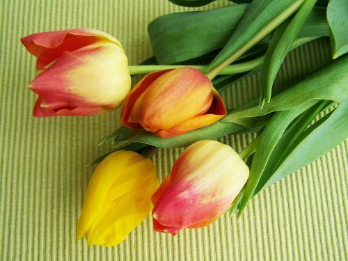 tulpių puokštė,spalvingos tulpės,supjaustytos gėlės