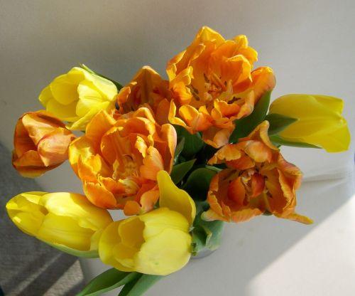 tulpių puokštė,supjaustytos gėlės,geltona-oranžinė