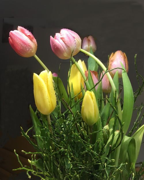 tulip bouquet colorful schnittblume