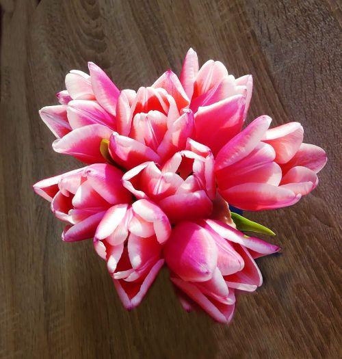 tulpių puokštė,Uždaryti,spalvinga,skintos gėlės