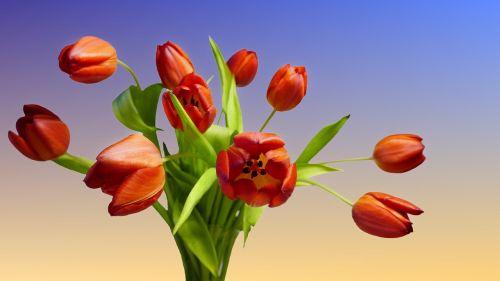 tulip bouquet bouquet tulips