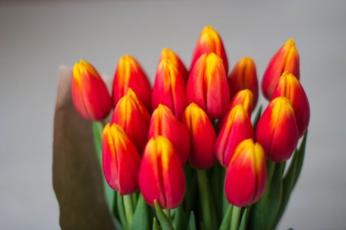 tulips bouquet women's holiday