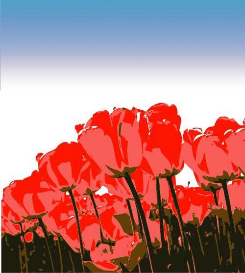 tulips vectors illustration