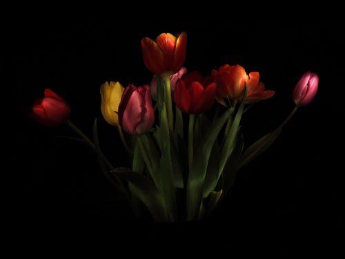 tulips strauss vase