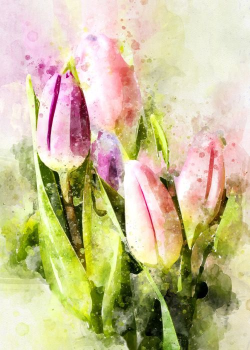 tulips flowers tulip bouquet